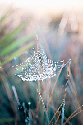 Spinnennetz - p795m1031518 von Janklein