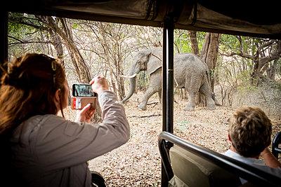Safari im Südluangwa-Nationalpark - p842m1538229 von Renée Del Missier