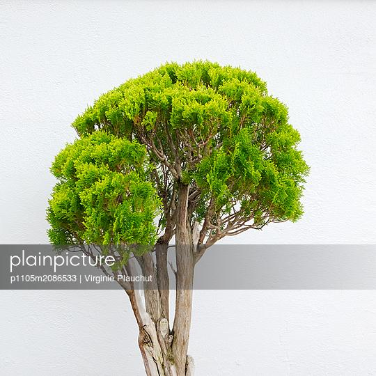 Tree - p1105m2086533 by Virginie Plauchut