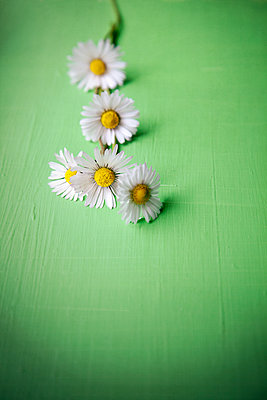 Daisies on Green - p1248m1573422 by miguel sobreira