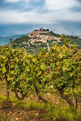Vineyards surrounding the hilltop medieval town of Motovun; Motovun, Istria, Croatia - p442m2113526 by Dosfotos