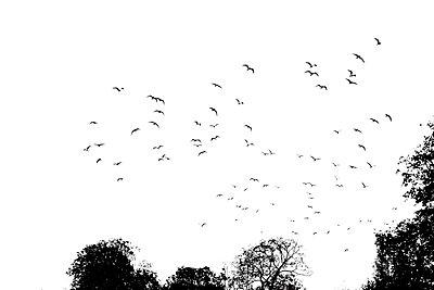 Vögel am Himmel - p450m859594 von Hanka Steidle