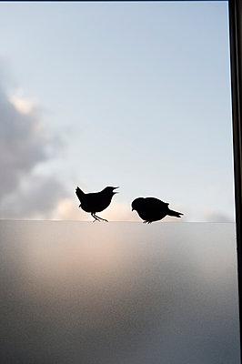 Zwei Vögel - p949m925710 von Frauke Schumann