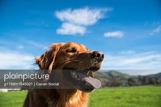 p1166m1545021 von Cavan Social