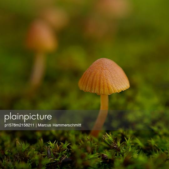 Pionier - p1578m2158211 von Marcus Hammerschmitt