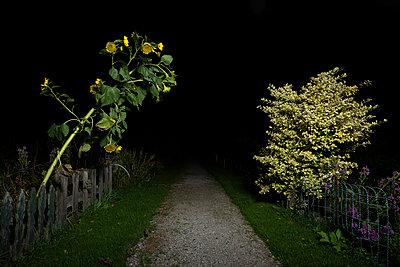 Sunflower - p1132m2027945 by Mischa Keijser
