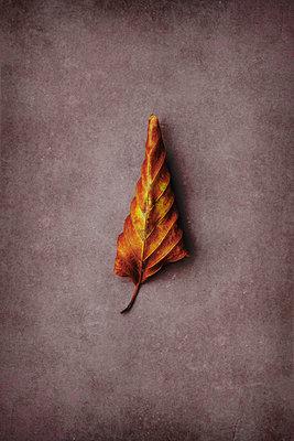 Autumn leaf - p1228m2125855 by Benjamin Harte