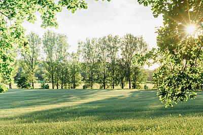 Trees and rural field in backlight - p300m2004701 von Jana Mänz