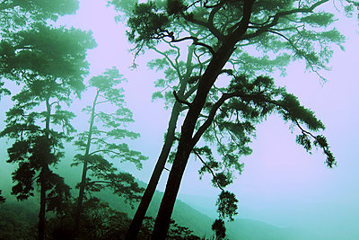 Misty hillside in Tam Dao - p934m893107 by Arno Baude photography