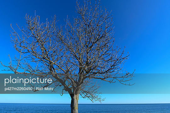 Bare tree on the island of Fehmarn - p427m2260450 by Ralf Mohr