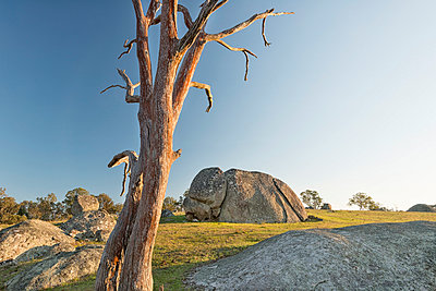 Australia, New South Wales, Arding, dead wood and boulders in the morning sun - p300m937509 by Holger Spiering