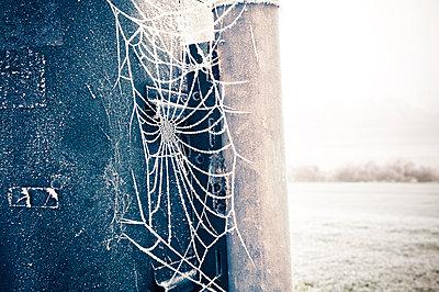 Vereistes Spinnennetz im Winter - p416m784673 von Thomas Schaefer