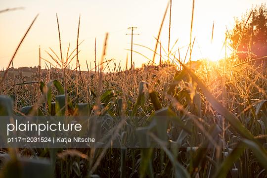 Feld im Sonnenuntergang - p117m2031524 von Katja Nitsche