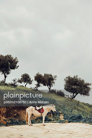 Waiting pony - p382m2108750 by Anna Matzen