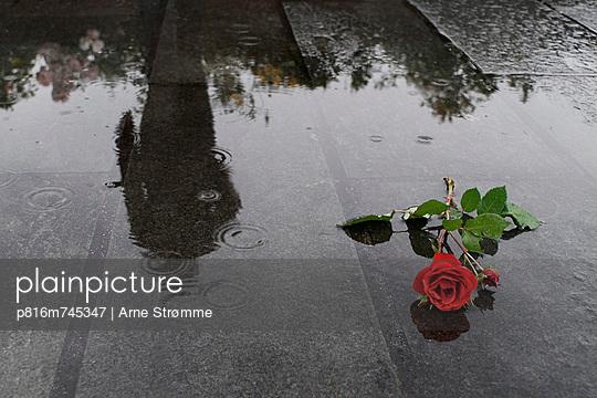 p816m745347 von Arne Strømme