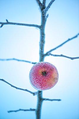 Apfel nach Eisregen - p936m954304 von Mike Hofstetter