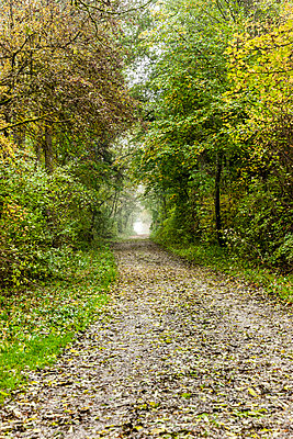 Gravel driveway - p248m1086979 by BY