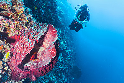 Underwater view of diver exploring coral reef at the Tubbataha Reefs Natural Park, Cagayancillo, Palawan, Philippines - p429m1578359 by Henn Photography