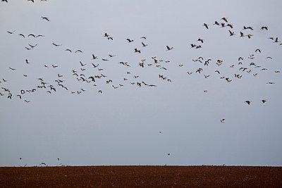 Vogelzug - p7390344 von Baertels