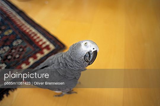 PET - p885m1087423 by Oliver Brenneisen