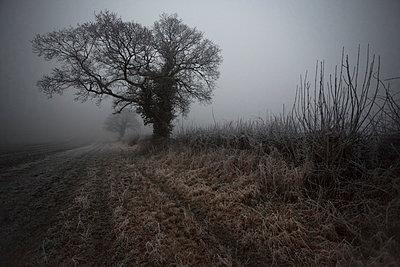Nebel - p1057m817891 von Stephen Shepherd