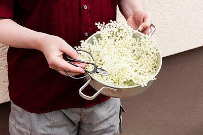 Mid section of man holding saucepan with freshly picked elderflowers - p300m2242887 by Eva Gruendemann