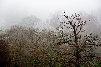 Blattlose Bäume in Nebel gehüllt - p1057m2044761 von Stephen Shepherd