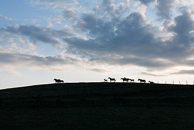 Horses - p1683m2272035 by Luisa Zanzani