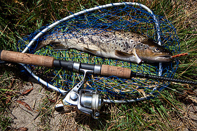 Freshly caught brown trout in net beside fishing rod  - p301m799659f by Tobias Titz