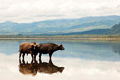 National park in Kenia - p5330300 by Böhm Monika
