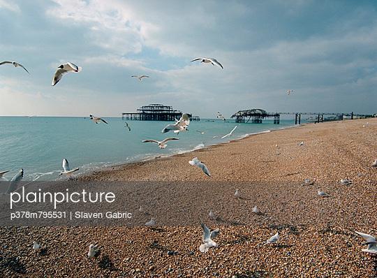 Seagulls flying around beach - p378m795531 by Slaven Gabric