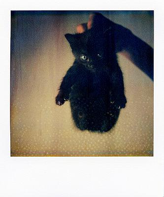 Kätzchen - p9111837 von Jeff Roques