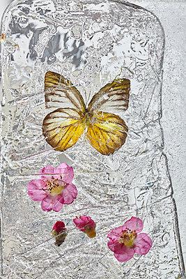 p1294m1559416 by Sabine Bungert