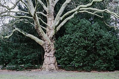 Knorriger Baum - p1357m1510885 von Amadeus Waldner