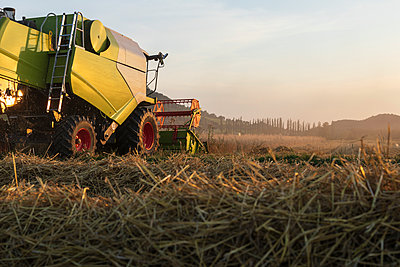 Organic farming, wheat field, harvest, combine harvester in the evening - p300m2132517 by Sebastian Dorn