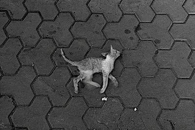 Totes Kätzchen - p56711729 von Vincent Soyez