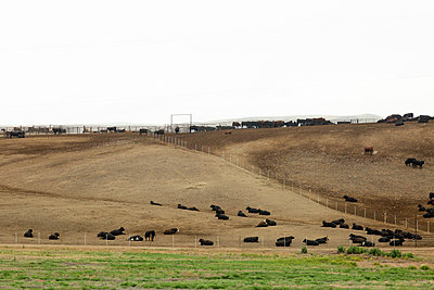 Rinderfarm, Utah, USA - p756m2215519 von Bénédicte Lassalle