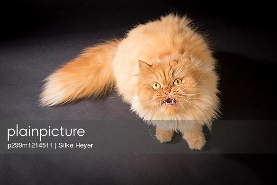 p299m1214511 by Silke Heyer