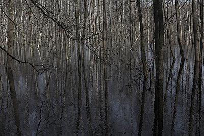 Birkenwald - p212m901001 von Edith M. Balk
