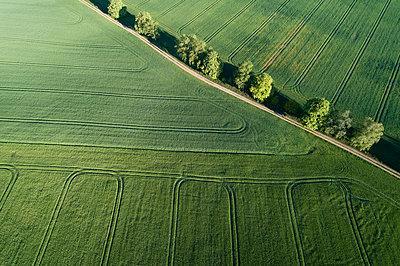 Aerial view of treelined dirt road through agricultural fields, springtime. Mecklenburg-Vorpommern, Mecklenburg Western Pomerania, Germany. - p300m2144378 von Martin Rügner