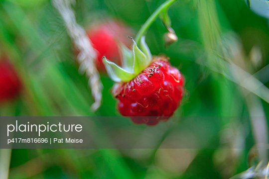 Himbeere - p417m816696 von Pat Meise