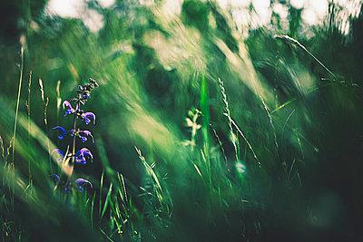 Grass - p1002m740783 by christian plochacki