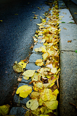 Autumn leaves along a sidewalk - p965m1525633 by VCreative