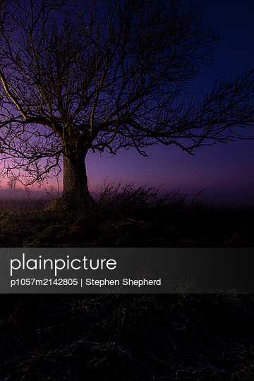 Leafless tree at sunset - p1057m2142805 by Stephen Shepherd