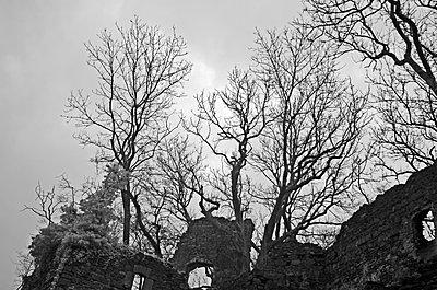 Ruine Spilberg bei Langenstein, Oberösterreich, Infrarot Aufnahme - p1463m2191665 von Wolfgang Simlinger