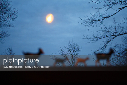 Animal silhouettes and moon - p378m796195 by Steve G Anderson