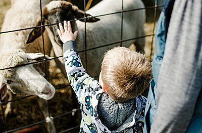 High angle view of boy stroking goat while standing with brother - p1166m1211585 by Cavan Images