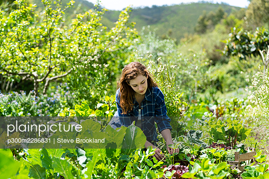 Young woman picking vegetables in organic permaculture garden in Portugal - p300m2286831 von Steve Brookland