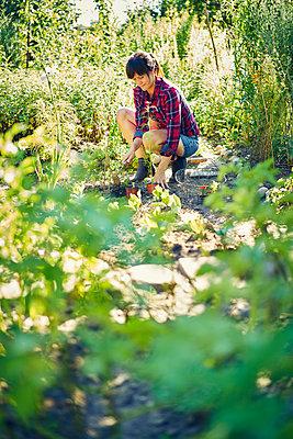 Frau pflanzt Setzlinge - p1312m1176985 von Axel Killian