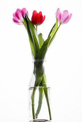Tulips in vase - p1418m1571764 by Jan Håkan Dahlström